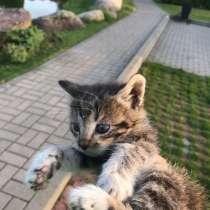 Озарные котята ждут вас, в г.Минск