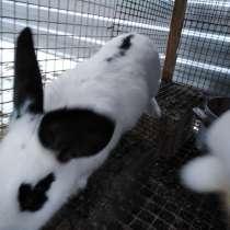 Кролики, в Черкесске