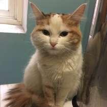 Найдена кошка, район гостиница Таганрог, верну хозяину, в Таганроге