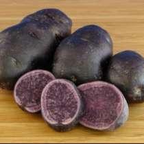 Продам картофель с фиолетовой мякотью, в Санкт-Петербурге