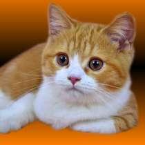 Золотые кошки. Рыжая кошка в дом, в Ярославле
