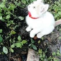 Отдам котят в хорошие, добрые руки, в Владикавказе