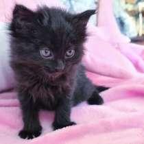Помогите найти дом котятам! Очень срочно! Им требуется семья, в г.Алматы