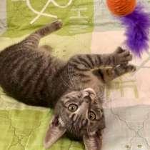 Славный котенок Тимон - сплошное очарование, в Москве