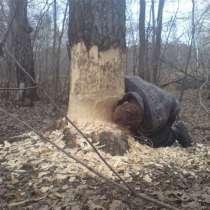Продам дрова, в г.Кривой Рог