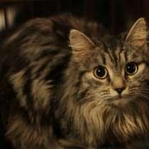 Отдам даром Кошка Тася, 1 год, в Томске