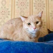 Рыжий котик Персик ищет дом!, в Москве