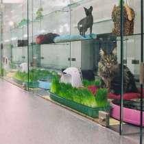 Ищу партнера для открытия гостиницы для животных, в г.Минск