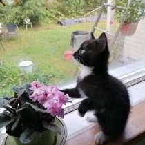 Отдам кошку в хорошую семью, в г.Котка
