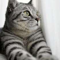 Отдам кошку британец в добрые руки, в г.Харьков
