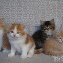 Согревающие солнечные сибирские котята, в Воркуте