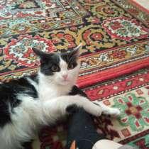 Кошка, в Ростове-на-Дону