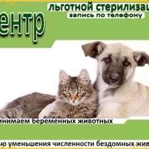 Льготная стерилизация животных, в Иркутске
