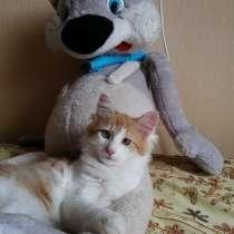 Котенок хорошим любящим людям, в Балахне