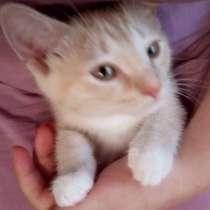 Котик, 2 месяца, в Москве