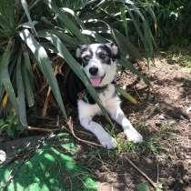 Собачка Лейси, в Краснодаре