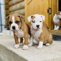 Puppies, в г.Варшава