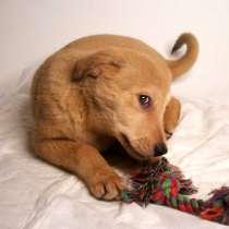 5 щенков метисов в добрые руки, в Москве