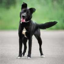 Миниатюрная собака в добрые руки, в Москве
