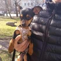 Продам милых щенков той терьера, в г.Берлин