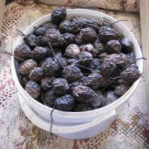Плоды маньчжурского ореха, в Екатеринбурге