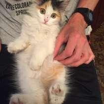 Котёнок, в Рубцовске