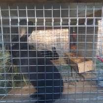 Кролики, в Цимлянске