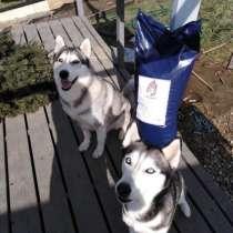 Корм для собак, в Краснодаре