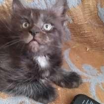 Продам котят Мейн Кун, в г.Миоры