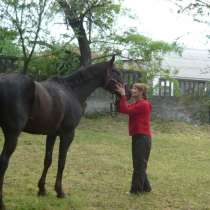 Постой для лошадей в г. николаев, в г.Николаев