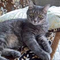 Молодой здоровый котик, в г.Темиртау