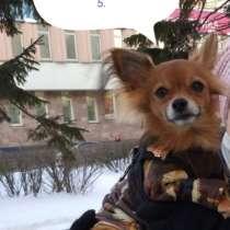 Нужен выгуливать для маленькой собачки, в Архангельске
