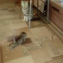 Породам котят шотландские, в Нижней Салде
