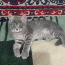 Милые котята, в г.Ташкент