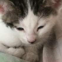 Котята в хорошие руки, в Вологде