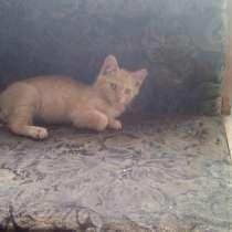 Котята, в Урюпинске