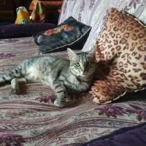 Кошка на передержку, в Одинцово