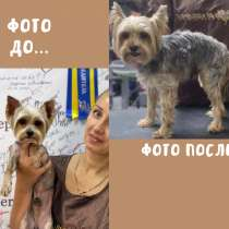 Парикмахер для животных, в Иванове