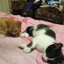 Котята в хорошие руки, в г.Орша