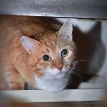Ищет свое счастье кот Рыжик, в Москве