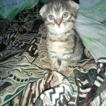 Котёнок вислоухий, в Батайске