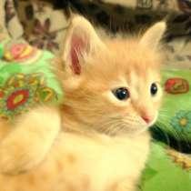 Котята в добрые руки, в Уфе