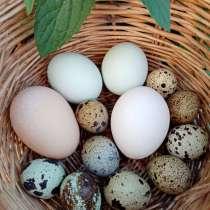 Яйцо, в Кирове