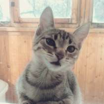 Котенок, в Самаре