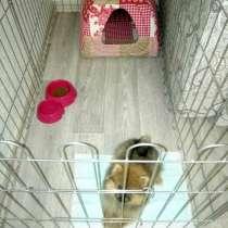 Вольер для щенков и мелких собак +ПОДАРОК, в Красноярске