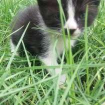 Котята бесплатно, в г.Мариуполь