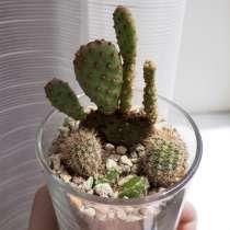 Флорариум с живыми растениями, в Краснодаре
