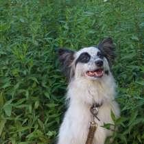 Собака, окрас черно-белый, в Томске