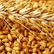 Казахстанское зерно, в г.Астана