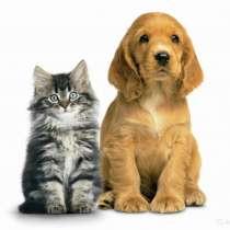 Стрижка собак и кошек в Орске, в Орске